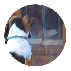 PVC záves na psie búdy